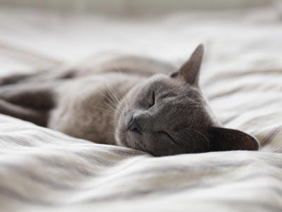 Beauty Sleep - January, The Self Care Season